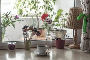 piante-che-purificano